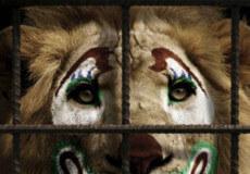 У Славуті сказали «Ні» циркам із дикими тваринами