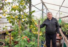 Лимони, ківі та іншу екзотику вирощує шепетівчанин