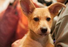 У Нетішині подали заявку на конкурс, який допоможе безпритульним тваринам