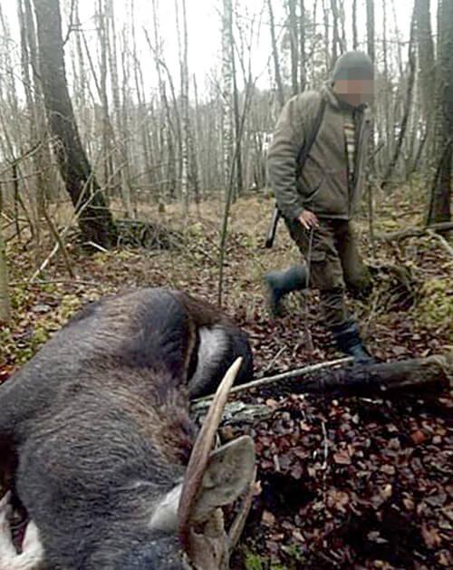 За фактом вбивства червонокнижної тварини на Славутчині розпочали слідство