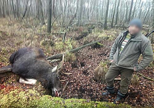 На Хмельниччині суд наклав арешт на зброю, що фігурує у вбивстві лося