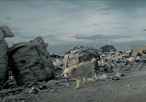 Песик з Хмельниччини став обличчям єдиного в Україні центру поводження зі сміттям