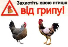 Держпродспоживслужба Шепетівщини попереджає про грип птиці