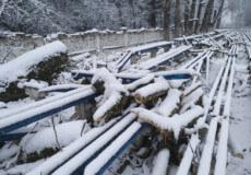 На стадіоні «Локомотив» під час видалення дерев сталася нестандартна ситуація