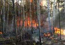 На Хмельниччині надзвичайникам вдалося врятувати 300 гектарів лісу