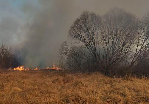 З початку року вже 7 разів горіли ліси Шепетівщини