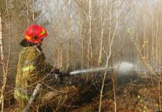 Шепетівські рятувальники спільно із працівниками лісгоспу ліквідували пожежу лісової підстилки