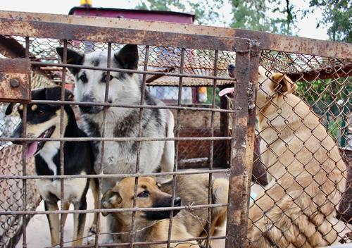 На вулицях Нетішина комунальники відловлюють безпритульних собак