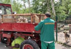 У Нетішині студенти-ветеринари стерилізуватимуть бездомних тварин під час практики