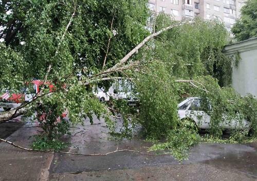 У Нетішині дерево впало на припаркований автомобіль