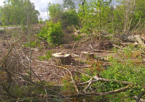 У Судилківській ОТГ незаконно зрізали 101 дерево