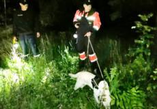 На Хмельниччині 12-річну дівчинку розшукали у лісі
