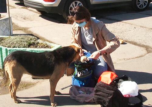 Нетішинці виписали штраф за годування безпритульних тварин у забороненому місці