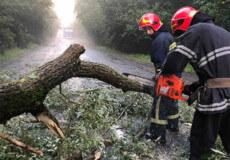 Неподалік Шепетівки дерево впало на проїжджу частину дороги