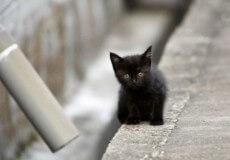У Нетішині встановили жінку, що підкинула у місто кошенят