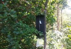 В ізяславських лісах розставили пастки