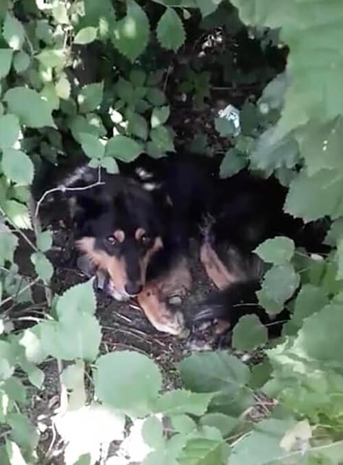 Історія повторюється: на Старокостянтинівщині двоє познущалися з домашнього пса