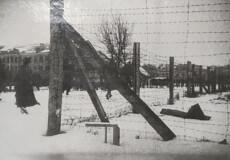 Історія порятунку єврейської дівчинки в період масового знищення євреїв на Шепетівщині