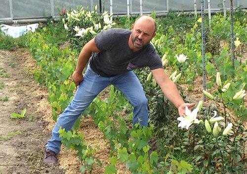 На 60 сотках землі селекціонер виростив 50 видів лілій, 200 сортів винограду та екзотичні фрукти