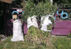 У Полонському районі полісмени вилучили у селянина урожай конопель