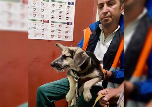 За останній тиждень у Нетішинській ОТГ стерилізували 5 безпритульних собак