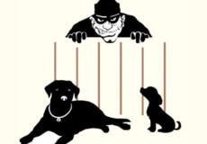 У Шепетівці в пенсіонерки вкрали собаку