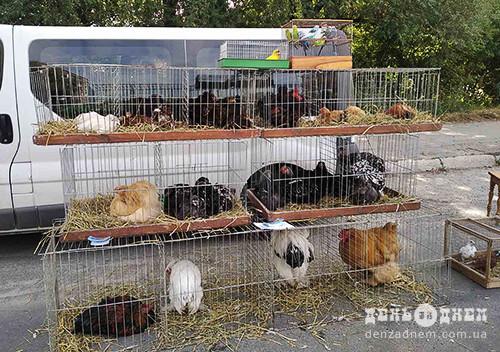 У Шепетівку на виставку-ярмарок привезли турецьких азілів та французьких баранів