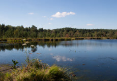 Мертве озеро на Шепетівщині: містика чи природне явище?