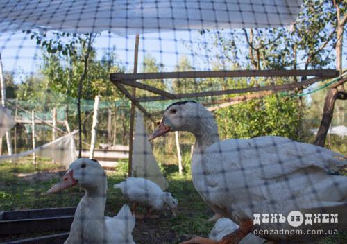 70-річний шепетівчанин займається тим, що подобається: вирощує лохину, а у планах— павловнію