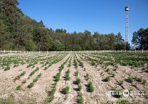 У Мальованському лісництві вирощують святкові дерева, а також є горіховий і плодовий сад