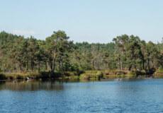 У прокуратурі повідомили про зрушення у справі незаконної вирубки дерев на Шепетівщині