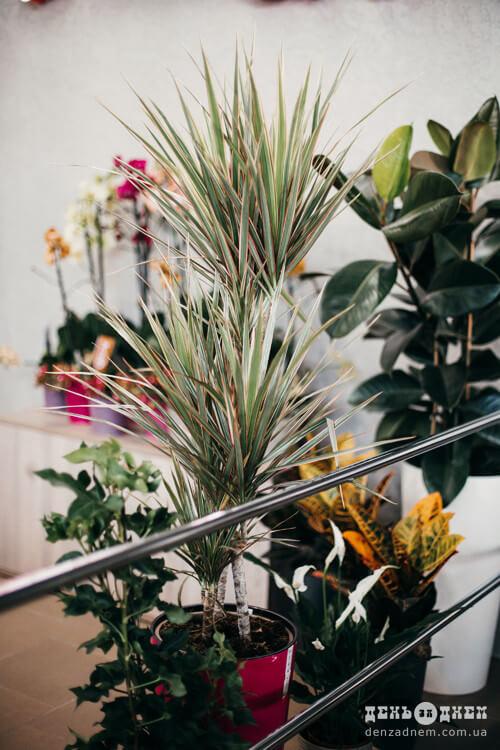 Молода підприємниця презентувала шепетівчанам світ орхідей