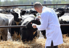 На Шепетівщині проводять осінню диспансеризацію тварину приватному секторі