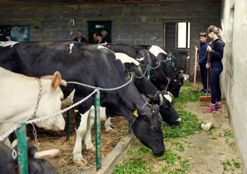 Охочих розпочати власну справу запрошують створити сімейну молочну ферму