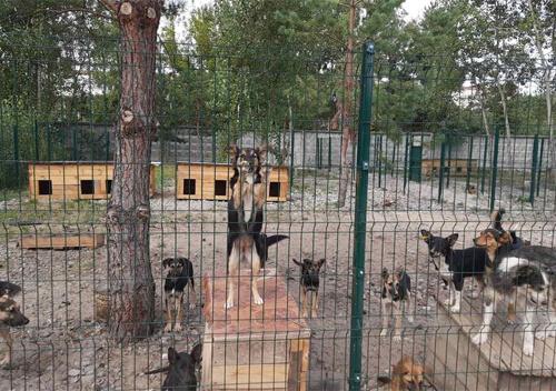 Цьогоріч у Нетішині за кошти з міського бюджету стерилізували 106 собак і 19 котів