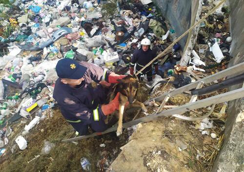 У Славутському районі двоє собак потрапили до чотириметрової пастки