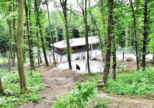 На Хмельниччині 5 арештованих ведмедів передали у «Парк хижаків «Арден»