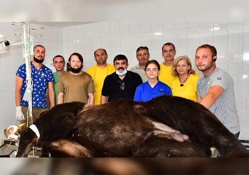 Почесний громадянин Славути допомагає у лікуванні ведмедів