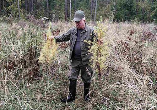 Зловмисники вчинили недопустиме на ділянці Славутського лісгоспу