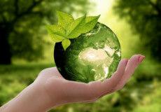 Шепетівщина долучиться до озеленення України
