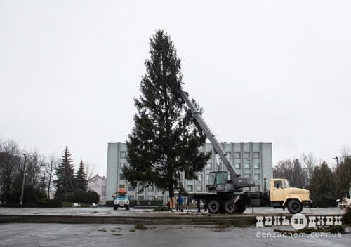 На станції Шепетівка-Подільська зрізали 20-метрову ялинку для новорічних святкувань