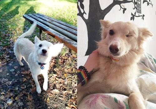 Зоозахисниці Шепетівки шукають господарів для двічі зрадженої собаки Бетті