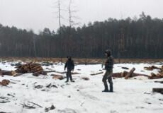 На території ландшафтного парку лісокомунальне підприємство незаконно вирубало на 11 мільйонів дерев