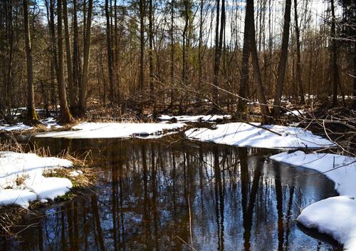 У лісах Шепетівського району з 1 квітня розпочнеться сезон тиші