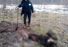 Мисливець, який вбив лося європейського в шепетівському лісі, постане перед судом
