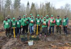 До насаджування лісу долучилися працівники Михайлюцької ОТГ та Понінківської селищної ради