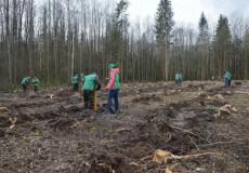 Лісівники Шепетівщини починають реалізовувати програму Президента України
