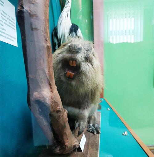 Музею міста Нетішина подарували експонат
