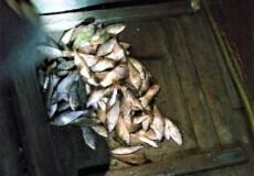 На Горині викрили рибалку-браконьєра із забороненими снастями
