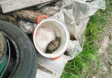 У Шепетівці жінка копала город і знайшла гранату часів війни